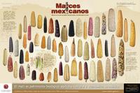 Imagen de Maíces mexicanos