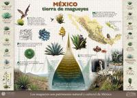 Imagen de México: Tierra de magueyes