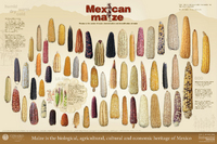 Imagen de Mexican Maize