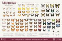 Imagen de Mariposas de México