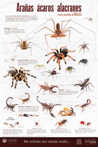 Imagen de Arañas, ácaros, alacranes y otros arácnidos de México