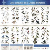 Imagen de Aves comunes de la Ciudad de México