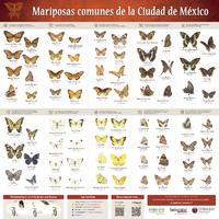 Imagen de Mariposas comunes de la Ciudad de México