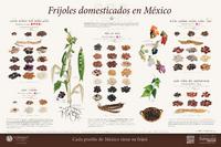 Imagen de Frijoles domesticados en México